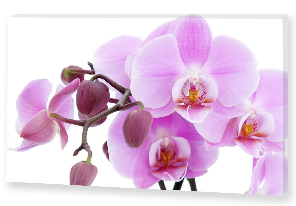 фото картины с орхидеями